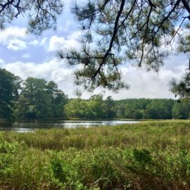 Virginia Eastern Shore Land Trust