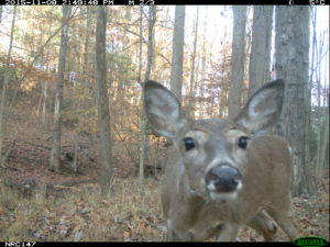 Smithsonian Study_Bliss Deer 2015