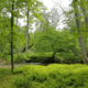 NVCT Protects 6 acres of wildlife habitat in Clifton